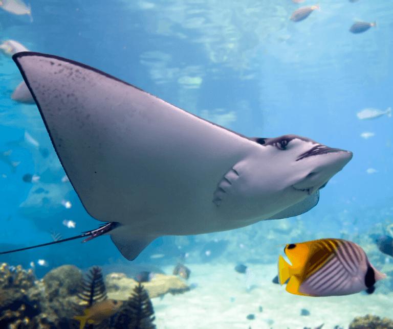 aquarium-photo